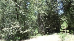 3500 Amapola Lot 3 Ct, Camino, CA 95709 — Nice Land With Water Meter In. Amapola Court Needs To Be Completed. This Lot Is At The Beginning Of The Subdivision, Lots Of Privacy Several Nice Building Sites.