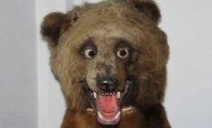 19 Reasons Why @CrapTaxidermy Is The Most Horrifying Account On Twitter  I love some bad taxidermy