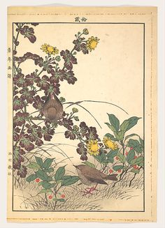 Imao Keinen (Japanese, 1845–1924). Keinen kachō gafu 景年花鳥畫譜  Two Birds and Crysanthemums, from Keinen kachō gafu (Keinen's Flower-and-Bird Painting Manual), 1891. The Metropolitan Museum of Art, New York. Bequest of Grace M. Pugh, 1985 (JP3702)