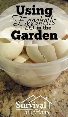 Using Eggshells in the Garden to Help Feed Your Plants is part of garden Tips Egg Shells - Using eggshells in the garden helps provide a boost of calcium to your garden plants All plants need calcium especially tomatoes and other nightshades
