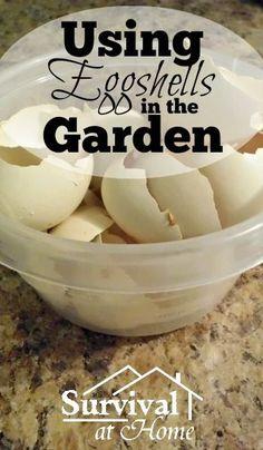 Using Eggshells in the Garden   Survival at Home   #prepbloggers #garden