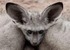 Cosy Fox by Hendri Venter / 500px