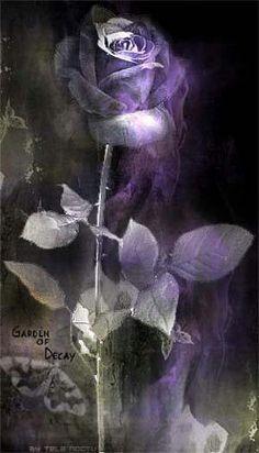 Shades of purple rose Purple Love, Purple Art, All Things Purple, Shades Of Purple, Purple Flowers, Purple And Black, Purple Stuff, Art Violet, Color Lavanda