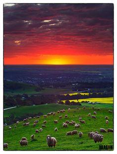 """Sunset over Lyndoch, Barossa Valley"", South Australia's wine country! #yankinaustralia #australia"