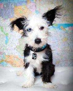 Such a cute dog...photo  A Healthy Dog is a Happy Dog / www.PetWellbeing.org