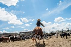 Hank Ward prepares his loop as he rides his horse back into the herd of calves to rope another one to drag to the fire at a branding on the Cowan Ranch. Irons, Fire, Horses, Photography, Animals, Photograph, Animales, Animaux, Iron