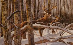 Wildlife art prints plus original paintings with a wide selection from ArtBarbarians.com located in Minnesota. Deer Paintings, Wildlife Paintings, Wildlife Art, Original Paintings, Hunting Art, Hunting Stuff, Deer Hunting, Deer Pictures, Animal Pictures