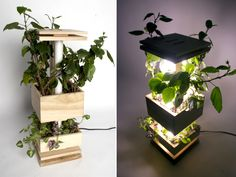 Natuurlijk licht lampen voor planten foto - 5