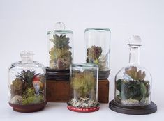 Bottle Art Projects for Outside | Upcycle Wine Bottles to Terrarium Wonderlands — Saved By Love ...