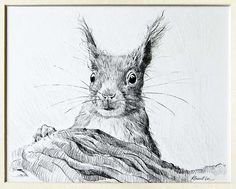 squirrel pencil drawing - Hledat Googlem