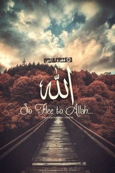 So flee to Allah, verily, I am a plain warner to you from Him - 51:50  www.lionofAllah.com