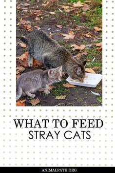 What to feed stray cats? Chicken Cat, Fish And Chicken, Canned Cat Food, Dry Cat Food, Animal Shelter, Animal Rescue, Salmon Cat, Cat Nutrition, Feral Cats