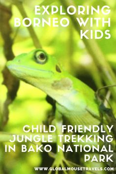 Exploring the Malaysian Borneo rainforest with kids is fabulous. Click on the photo to read about our jungle trek in Bako National Park and all of the animals and creatures we saw. #travelwithkids