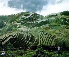 BENV2423-2012 KIERAN CHAN: 5 different landscapes