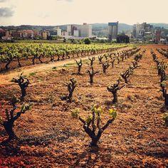 Vinya, construcció i indústria #Penedes