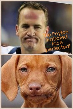 Peyton Mannings dog.  Too funny!  ~ Check this out too ~ RollTideWarEagle.com sports stories that inform and entertain and Train Deck to learn the rules of the game you love. #Collegefootball Let us know what you think. #PeytonManning