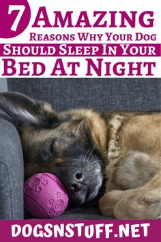 Here are the top benefits of letting your dog sleep with you in the night! Feeling Scared, How Are You Feeling, Wild Animals Pictures, Feeling Of Loneliness, Pet Fox, Dog Rules, Dog Hacks, Sleeping Dogs, Dog Behavior