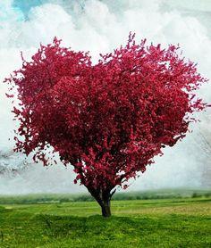 formato de coração