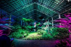 Photos: The Otherworldly Light Show Taking Over The Garfield Park Conservatory: Chicagoist Aesthetic Space, Aesthetic Room Decor, Aesthetic Photo, Aesthetic Girl, Episode Backgrounds, Abstract Backgrounds, Light Art Installation, Mode Kpop, Japanese Landscape