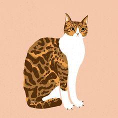 Digital Media, Graphic Design, Cats, Illustration, Animals, Gatos, Animales, Animaux, Animal