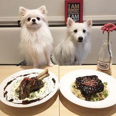 いいね!99件、コメント3件 ― ☁️ ClouD & FrozT ☃さん(@cloudandfrozt)のInstagramアカウント: 「😋 Woah!! Look at the delicious lamb shank & pork ribs~ Keeping our mouths closed to keep all the…」