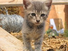My kitten who grew up, then had kittens, and was killed. IMG_1823 by brianfey, via Flickr