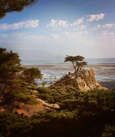 The Lonely Cypress. El ciprés solitario. 2008. #lonelycypress #17miledrive #pebblebeach #california #usa #cypress #pacificocean #landscape #waterscape #nature #naturaleza #canon450d #travelphotography #Travel #viajes #visitcalifornia #instatravel #fb #travelstoke #lonelyplanet #wanderlust #natgeotravel