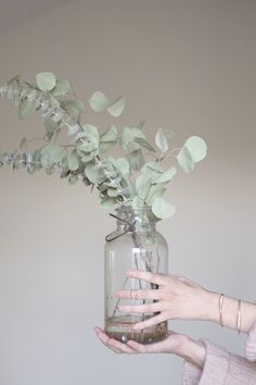 Eucalyptus polyanthemos - Silver Dollar Tree.. I would love to have this tree. :) Smells great and I would constantly use in a vase