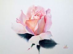Roses ... Artist - watercolorist La Fe. Discussion on LiveInternet - Russian Service Online Diaries