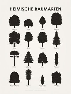 Learning poster, display board or infographic to determine the shape and silhouette . - Learning poster, display board or infographic to determine the shape and silhouette of various nati - Iris, Animal Tracks, Chestnut Horse, Tree Shapes, Tree Silhouette, Inspirational Wall Art, Garden Trees, Bonsai Garden, Graphic Design Illustration