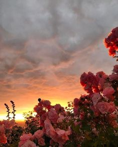 sunset and flowers aesthetic & sonnenuntergang und blumen ästhetisch sunset and flowers aesthetic & Watercolor aesthetic flowers; Nature Aesthetic, Flower Aesthetic, Pink Aesthetic, Feeds Instagram, Pretty Sky, Flower Boys, Pretty Flowers, Pink Flowers, Flowers Nature