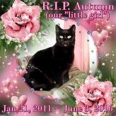 Friend from CC Survivor/FB late cat