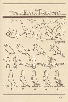 How to draw a pigeon or a seagul