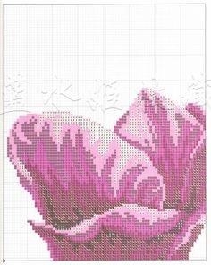 tulipany 6