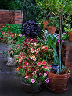 7 Tips On How To Use Potted Plants To Dress Up Your Landscaping The Easy Way.