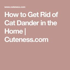 Best way to get rid of cat urine cat help,cat keeps peeing on carpet cat started urinating in house,cat urine scent finding cat pee. Urine Odor, Cat Urine, Cat Pee Smell, Pet Dander, Litter Box, Apple Cider, Cute Cats, Cleaning