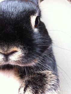 Bunny's close-up portrait - May 16, 2013