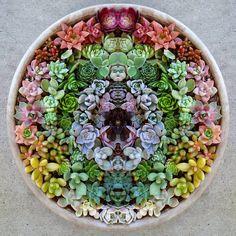 I absolutely LOVE succulents! Succulent Bowls, Succulent Wall, Succulent Gardening, Succulent Arrangements, Succulent Terrarium, Succulent Ideas, Container Gardening, Succulents In Containers, Cacti And Succulents