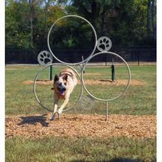 Hoop Jump | Dog Park Equipment