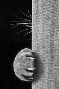 cat photography A cat whos always hissing and scratching at you might actually just be really scared. Animals And Pets, Funny Animals, Cute Animals, Animals Images, Crazy Cat Lady, Crazy Cats, Beautiful Cats, Animals Beautiful, Beautiful People