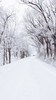Winter Road Romantic Nature Snow White