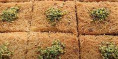Dondurma ya da Kaymak Eşliğinde Türk Mutfağı Tatlılarından Püf Noktasıyla Kadayıf tarifi