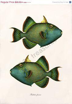 Frühling Verkauf antike Fisch Collage Kunstdruck von 1001treasures