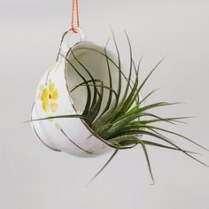 Well, as you can imagine, this had me chuckling all day. Adorable teacup suspended on colourful cord & holding an airplant.