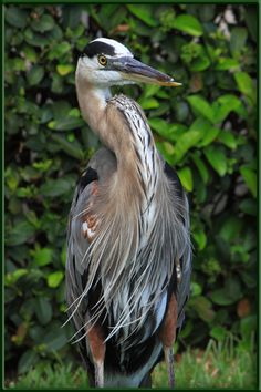 BIG Bird in Florida