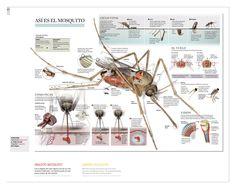 Jaime serra | Infografía a La Vanguardia
