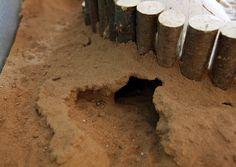 Erfahrungsaustausch: Buddeln in Sand-Lehm, Arvicave & co. - Haltung - www.das-hamsterforum.de