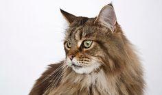 Ternyata ini Jenis Obat yang Tepat Untuk Kucing Cacingan