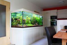 Aquarium Little Dream Aquarium Cabinet, Aquarium Design, Planted Aquarium, Manado, Marine Tank, Paludarium, Tanked Aquariums, Freshwater Aquarium, Pisces