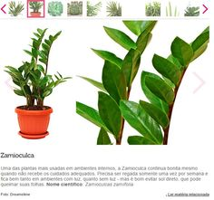 Planta área interna